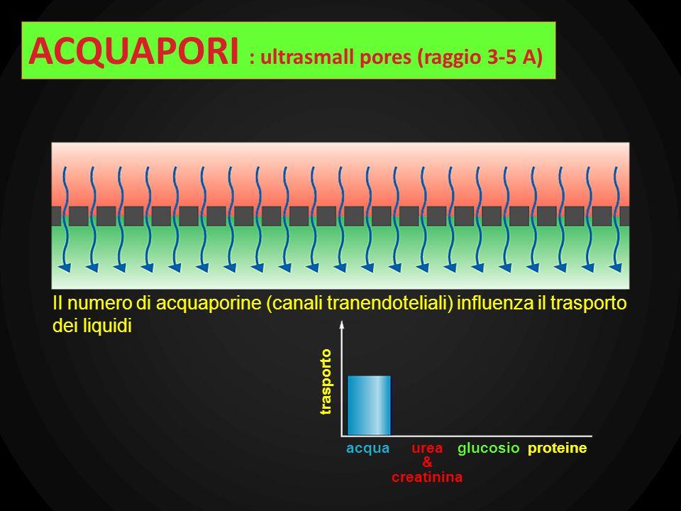 Il numero di acquaporine (canali tranendoteliali) influenza il trasporto dei liquidi trasporto acquaurea & creatinina glucosioproteine ACQUAPORI : ult