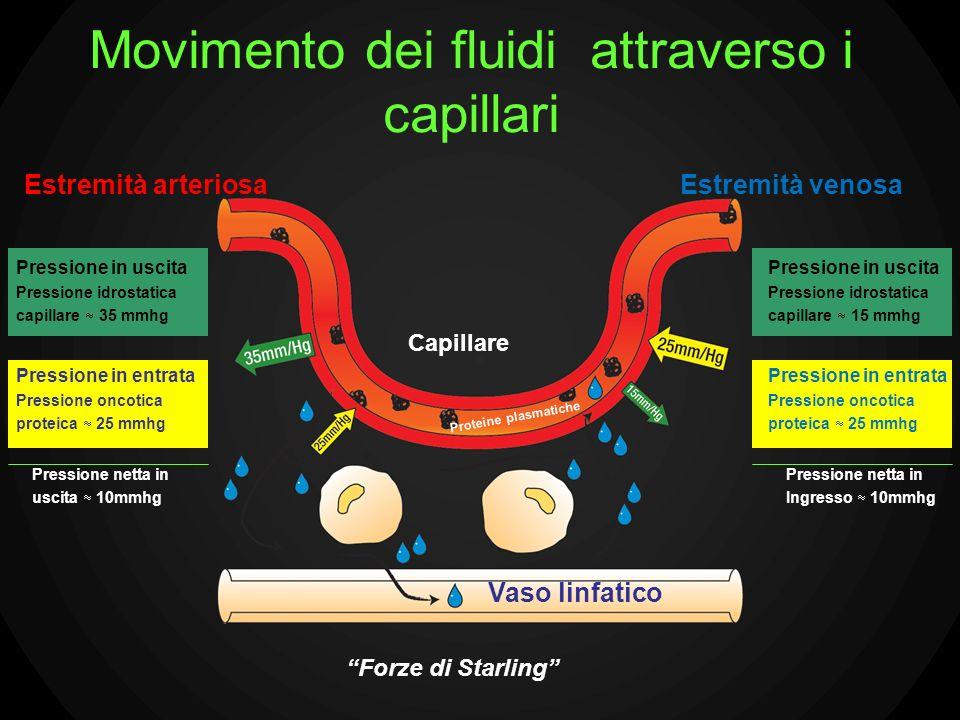 Movimento dei fluidi attraverso i capillari Estremità arteriosa Pressione in uscita Pressione idrostatica capillare 35 mmhg Pressione in entrata Press