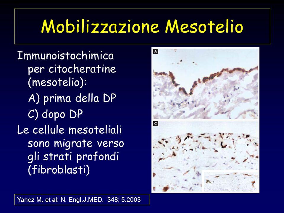 Mobilizzazione Mesotelio Immunoistochimica per citocheratine (mesotelio): A) prima della DP C) dopo DP Le cellule mesoteliali sono migrate verso gli s