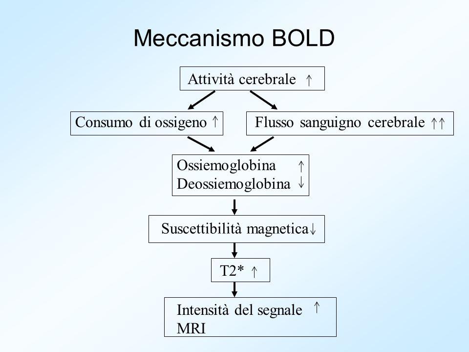 Meccanismo BOLD Attività cerebrale Consumo di ossigenoFlusso sanguigno cerebrale Ossiemoglobina Deossiemoglobina Suscettibilità magnetica T2* Intensit