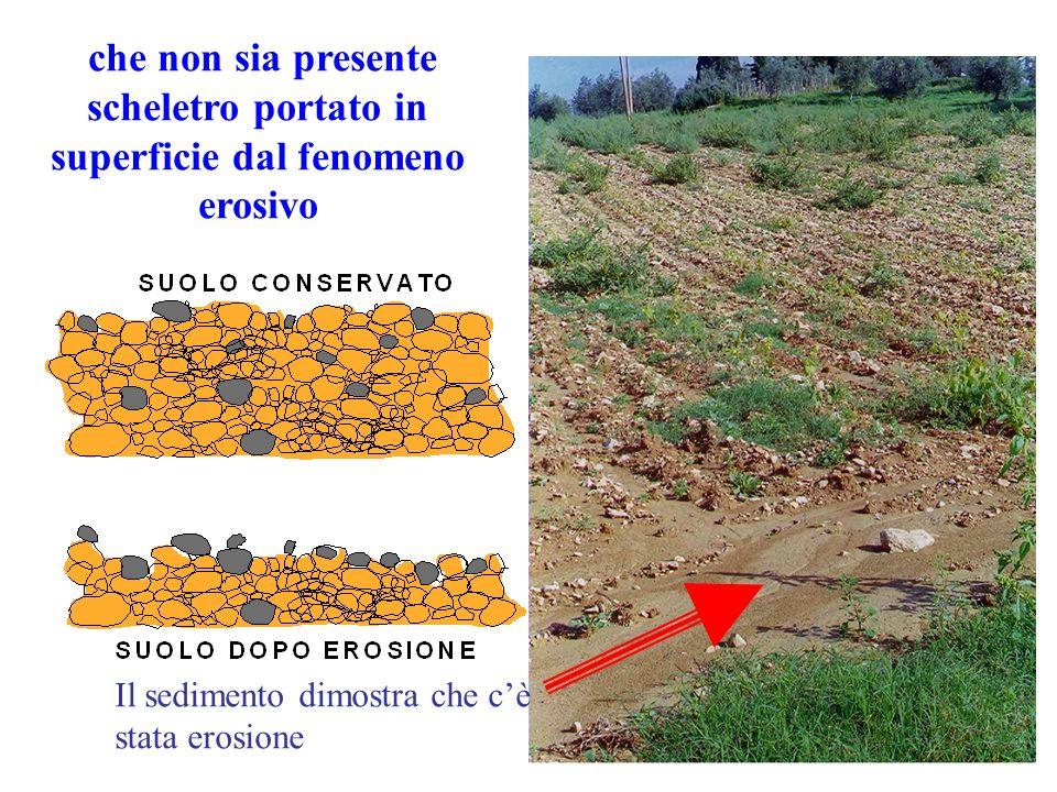 Il sedimento dimostra che cè stata erosione che non sia presente scheletro portato in superficie dal fenomeno erosivo