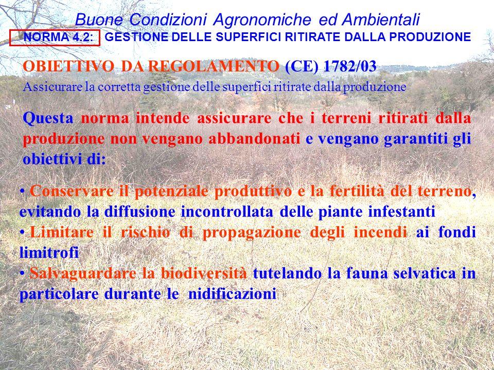 Buone Condizioni Agronomiche ed Ambientali NORMA 4.2: GESTIONE DELLE SUPERFICI RITIRATE DALLA PRODUZIONE OBIETTIVO DA REGOLAMENTO (CE) 1782/03 Assicur