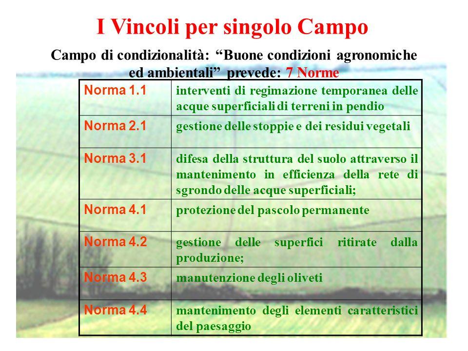 Le norme relative alle BCAA si applicano in funzione della utilizzazione del terreno Le norme del campo di condizionalità relative al mantenimento dei terreni in Buone Condizioni Agronomiche e Ambientali (BCAA) sono invece differenziate per TIPOLOGIA di UTILIZZAZIONE delle singole particelle aziendali: A) Superfici A SEMINATIVO in produzione (incluso set-aside investito a colture no-food o biologiche) Norma 1.1 B) Superfici A SEMINATIVO soggette allobbligo del ritiro dalla produzione (set aside) o ritirate volontariamente dalla produzione (terreni disattivati) Norme 2.1 e 4.2 C) Superfici a PASCOLO PERMANENTE Norma 4.1 D) Superfici con OLIVETI con riferimento alla cura della pianta Norma 4.3 E) QUALSIASI SUPERFICIE agricola aziendale, incluse quelle con colture permanenti o altre colture non beneficiarie di aiuti diretti, nel caso siano servite dalla rete poderale di sgrondo delle acque o rechino elementi caratteristici del paesaggio Norme 3.1 e 4.4
