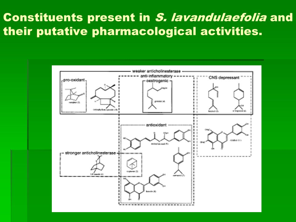 Constituents present in S. lavandulaefolia and their putative pharmacological activities.