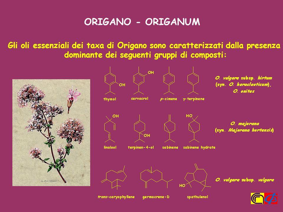 Gli oli essenziali dei taxa di Origano sono caratterizzati dalla presenza dominante dei seguenti gruppi di composti: ORIGANO - ORIGANUM