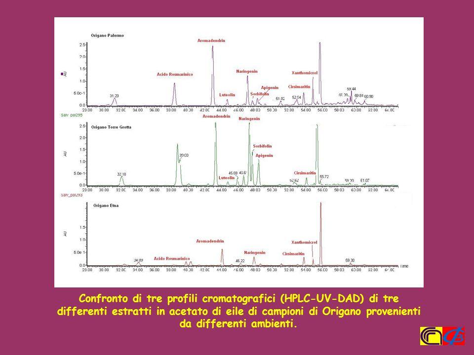 Confronto di tre profili cromatografici (HPLC-UV-DAD) di tre differenti estratti in acetato di eile di campioni di Origano provenienti da differenti a