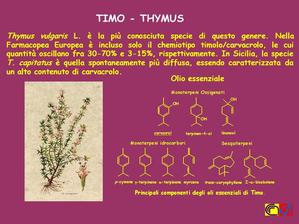 Thymus vulgaris L. è la più conosciuta specie di questo genere. Nella Farmacopea Europea è incluso solo il chemiotipo timolo/carvacrolo, le cui quanti