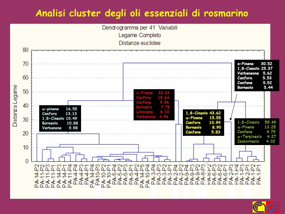 Analisi cluster degli oli essenziali di rosmarino -pinene 16.55 Canfora 13.13 1,8-Cineolo 10.49 Borneolo 10.88 Verbenone 9.98 -Pinene 33.03 Canfora 19
