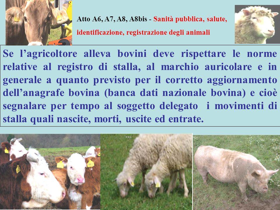 Atto A6, A7, A8, A8bis - Sanità pubblica, salute, identificazione, registrazione degli animali Se lagricoltore alleva bovini deve rispettare le norme