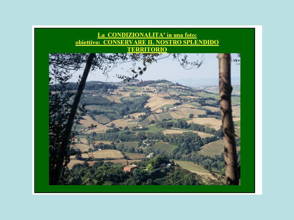Reg (CE) 1782/2003 - TITOLO II - Capitolo 1 - CONDIZIONALITA Art.
