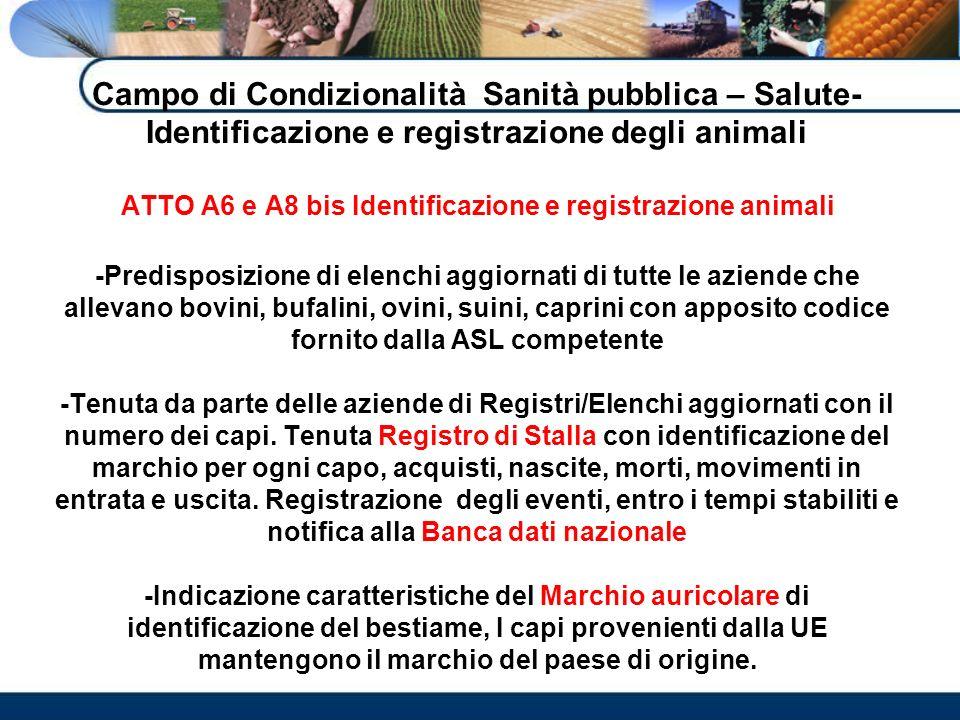 Campo di Condizionalità Sanità pubblica – Salute- Identificazione e registrazione degli animali ATTO A6 e A8 bis Identificazione e registrazione anima