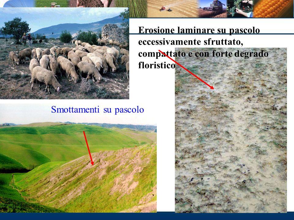 Erosione laminare su pascolo eccessivamente sfruttato, compattato e con forte degrado floristico Smottamenti su pascolo