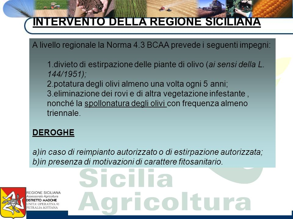 INTERVENTO DELLA REGIONE SICILIANA A livello regionale la Norma 4.3 BCAA prevede i seguenti impegni: 1.divieto di estirpazione delle piante di olivo (
