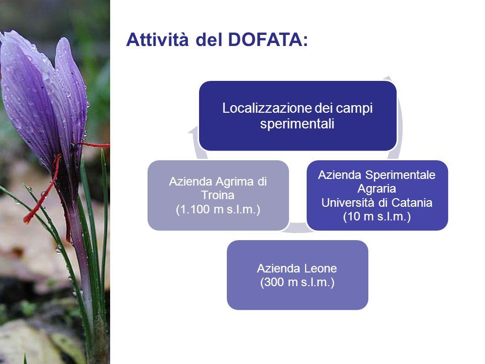 Attività del DOFATA: Localizzazione dei campi sperimentali Azienda Sperimentale Agraria Università di Catania (10 m s.l.m.) Azienda Leone (300 m s.l.m