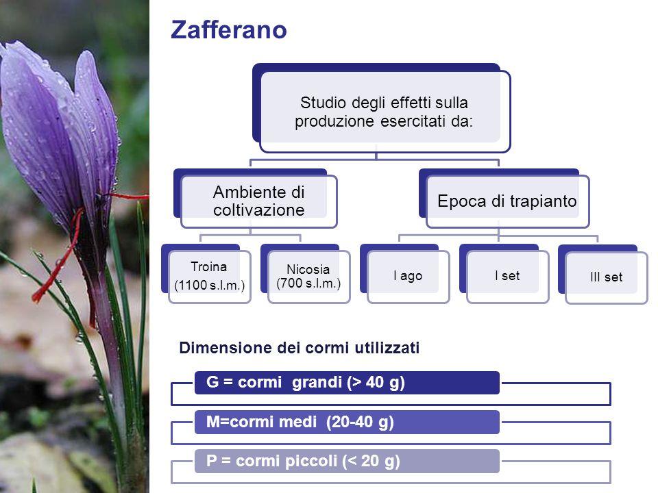 Zafferano Studio degli effetti sulla produzione esercitati da: Ambiente di coltivazione Troina (1100 s.l.m.) Nicosia (700 s.l.m.) Epoca di trapianto I