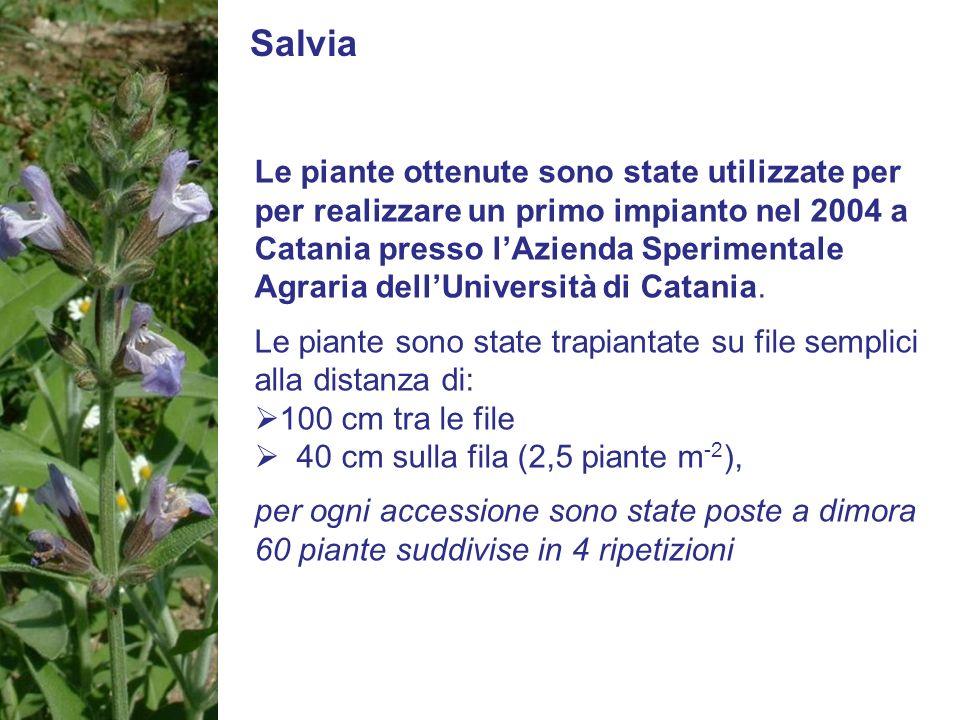 Salvia Le piante ottenute sono state utilizzate per per realizzare un primo impianto nel 2004 a Catania presso lAzienda Sperimentale Agraria dellUnive