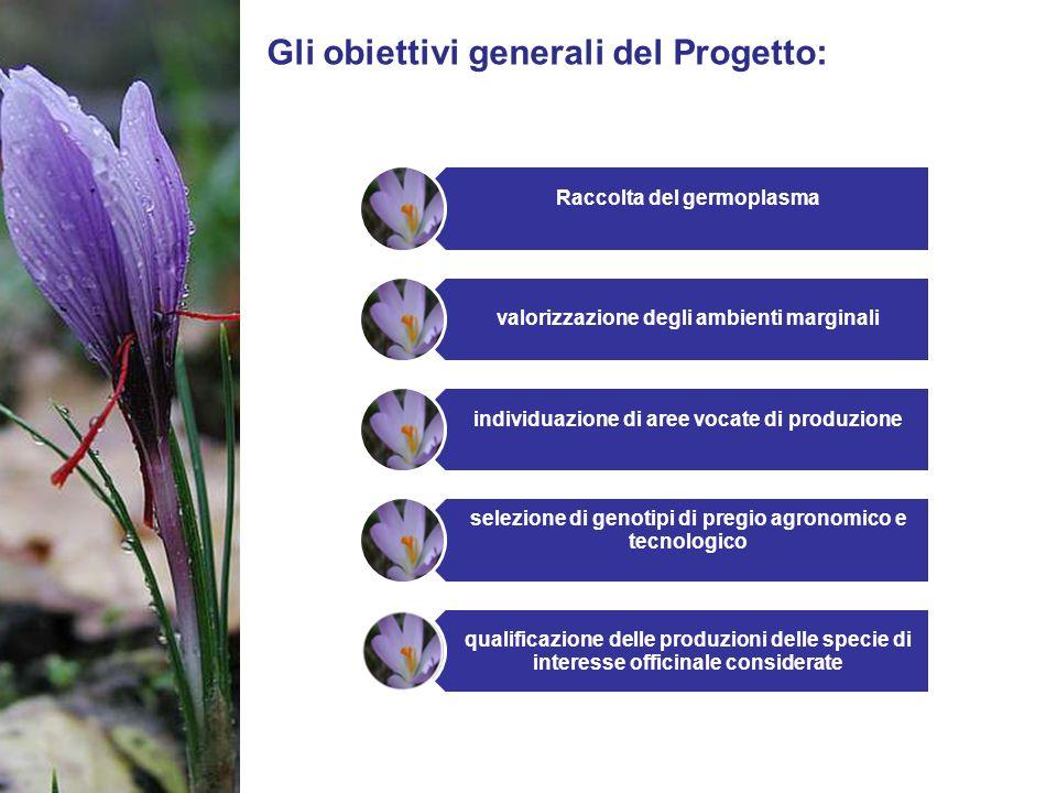 Gli obiettivi generali del Progetto: Raccolta del germoplasma valorizzazione degli ambienti marginali individuazione di aree vocate di produzione sele