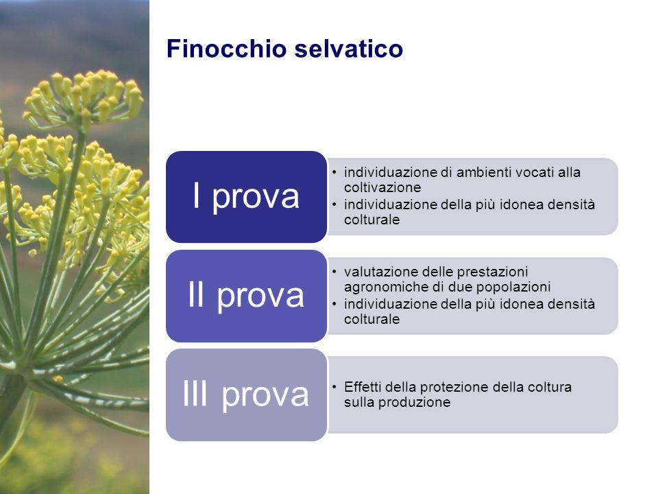 Finocchio selvatico individuazione di ambienti vocati alla coltivazione individuazione della più idonea densità colturale I prova valutazione delle pr