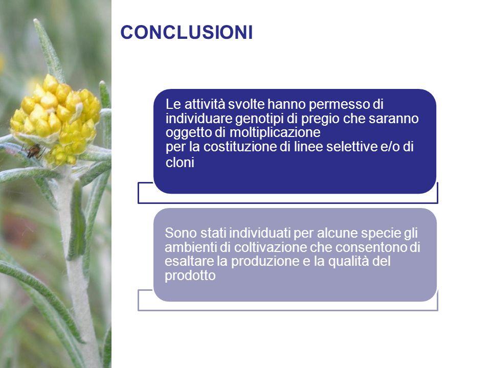 CONCLUSIONI Le attività svolte hanno permesso di individuare genotipi di pregio che saranno oggetto di moltiplicazione per la costituzione di linee se