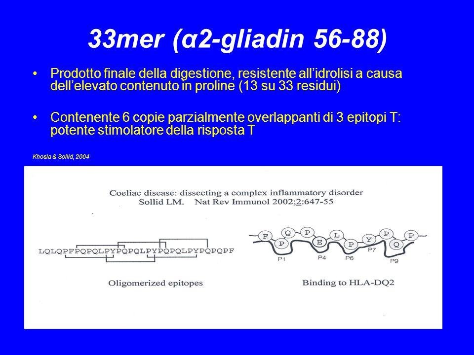33mer (α2-gliadin 56-88) Prodotto finale della digestione, resistente allidrolisi a causa dellelevato contenuto in proline (13 su 33 residui) Contenen