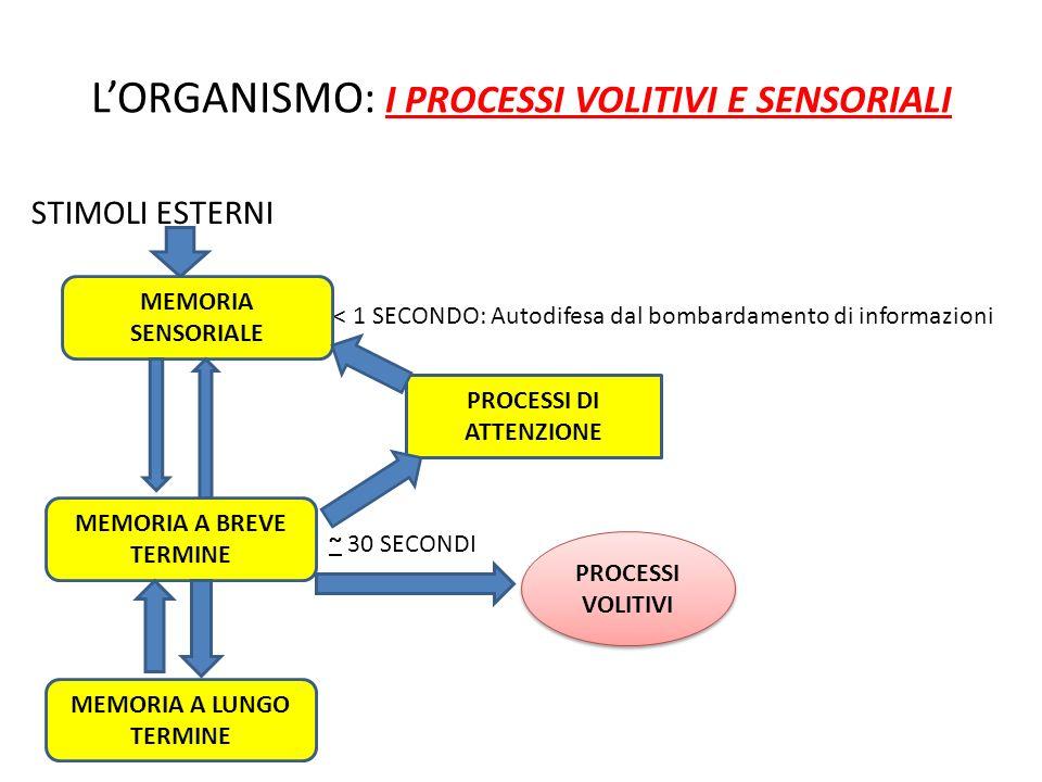 LORGANISMO: I PROCESSI VOLITIVI E SENSORIALI STIMOLI ESTERNI < 1 SECONDO: Autodifesa dal bombardamento di informazioni ~ 30 SECONDI MEMORIA SENSORIALE
