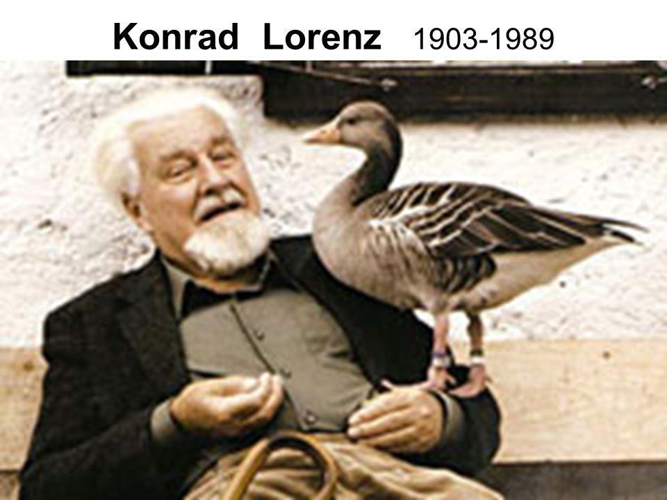 25 Konrad Lorenz 1903-1989