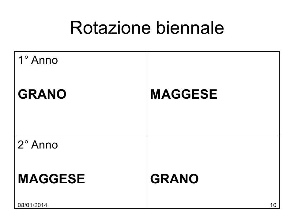 08/01/201410 Rotazione biennale 1° Anno GRANOMAGGESE 2° Anno MAGGESEGRANO