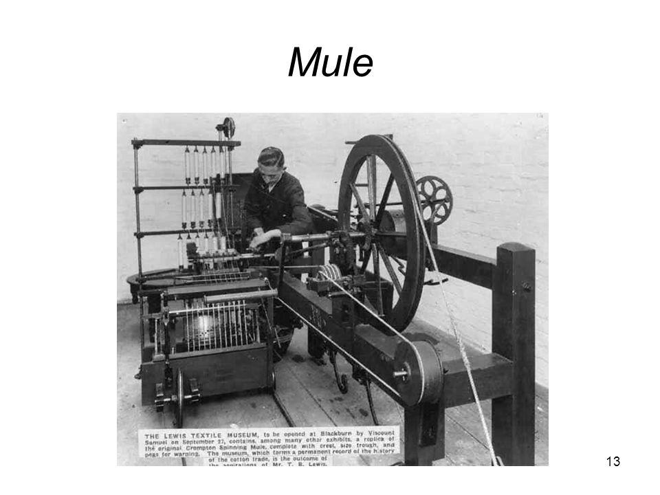 13 Mule