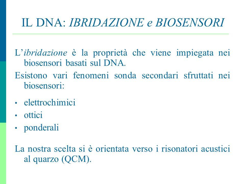10 IL DNA: IBRIDAZIONE e BIOSENSORI Libridazione è la proprietà che viene impiegata nei biosensori basati sul DNA. Esistono vari fenomeni sonda second