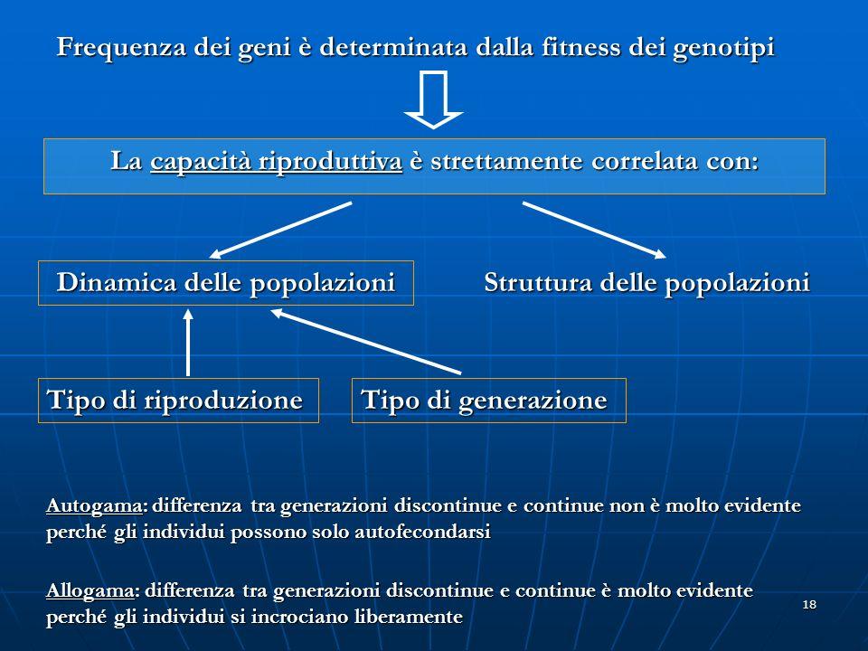 18 Frequenza dei geni è determinata dalla fitness dei genotipi La capacità riproduttiva è strettamente correlata con: Dinamica delle popolazioni Strut