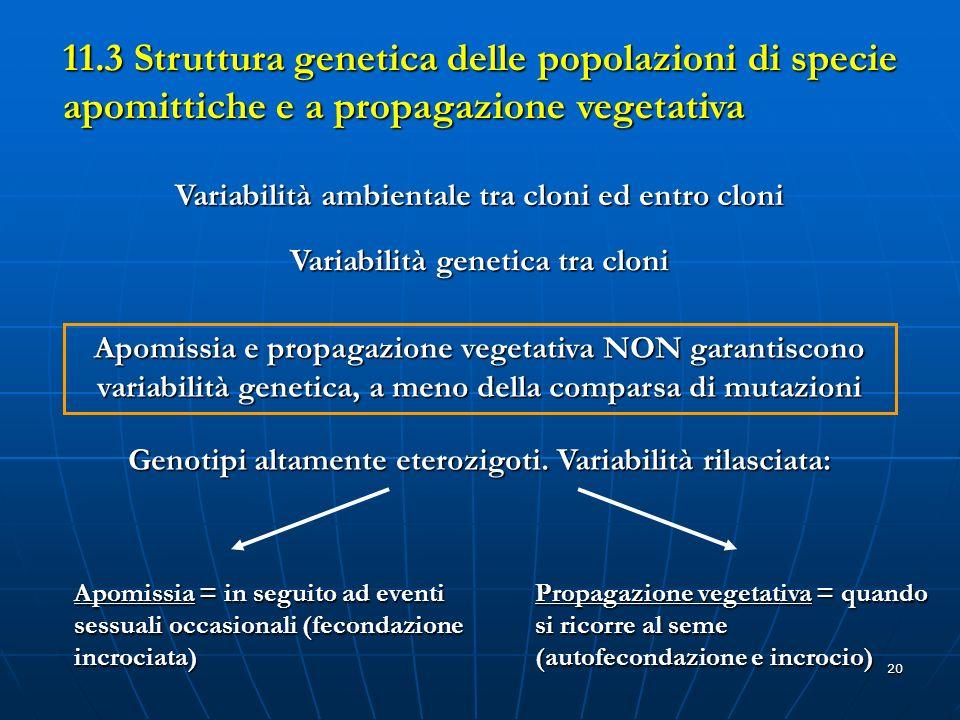 20 11.3 Struttura genetica delle popolazioni di specie apomittiche e a propagazione vegetativa Variabilità ambientale tra cloni ed entro cloni Variabi