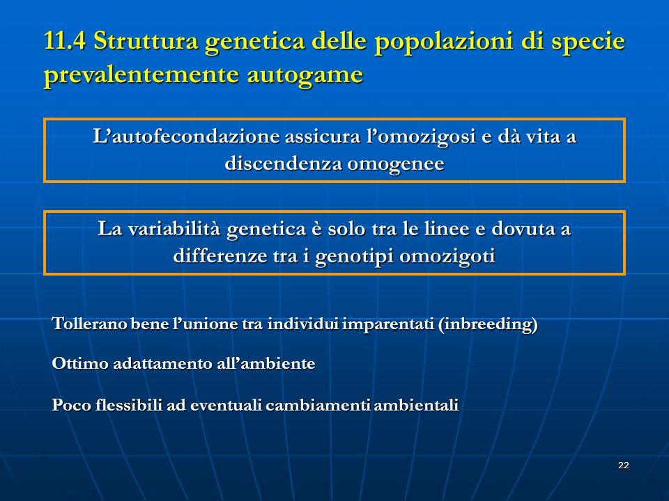 22 Lautofecondazione assicura lomozigosi e dà vita a discendenza omogenee La variabilità genetica è solo tra le linee e dovuta a differenze tra i geno