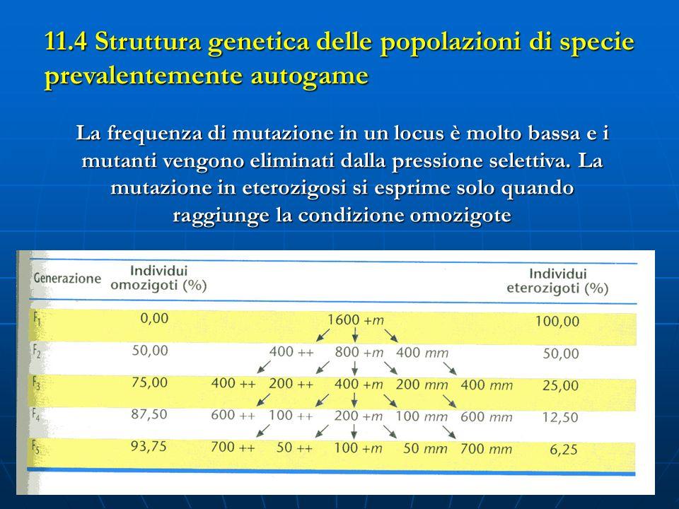 24 Tab 11.1 La frequenza di mutazione in un locus è molto bassa e i mutanti vengono eliminati dalla pressione selettiva. La mutazione in eterozigosi s