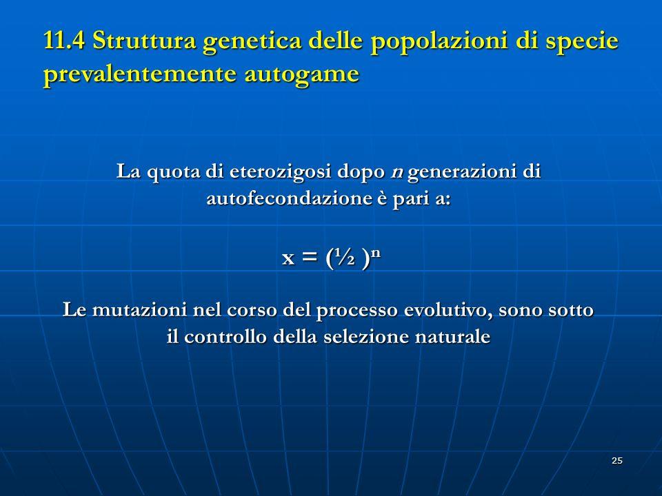 25 La quota di eterozigosi dopo n generazioni di autofecondazione è pari a: x = (½ ) n Le mutazioni nel corso del processo evolutivo, sono sotto il co