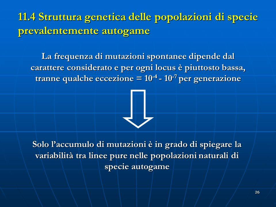 26 11.4 Struttura genetica delle popolazioni di specie prevalentemente autogame La frequenza di mutazioni spontanee dipende dal carattere considerato