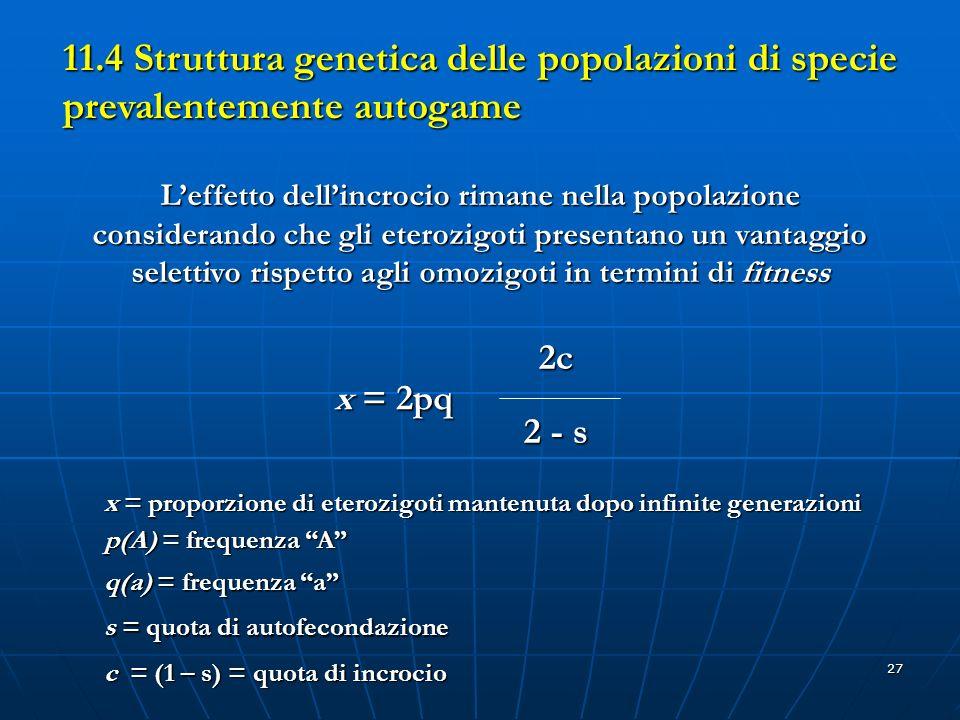 27 11.4 Struttura genetica delle popolazioni di specie prevalentemente autogame Leffetto dellincrocio rimane nella popolazione considerando che gli et