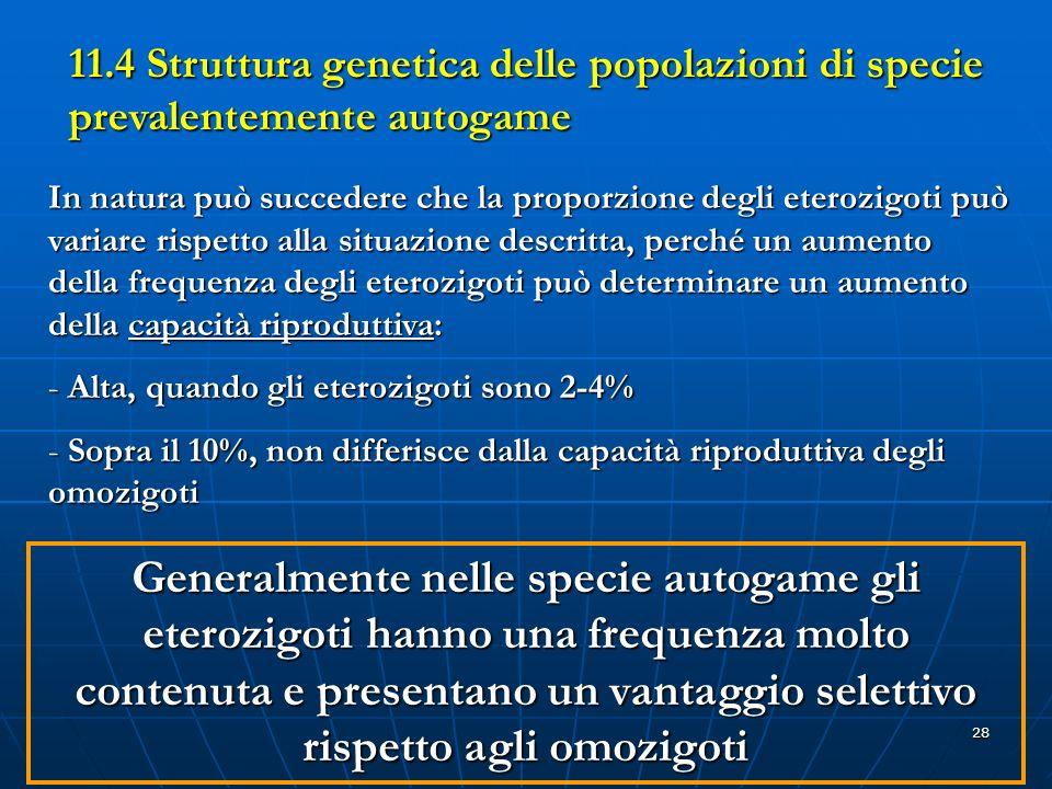 28 11.4 Struttura genetica delle popolazioni di specie prevalentemente autogame In natura può succedere che la proporzione degli eterozigoti può varia