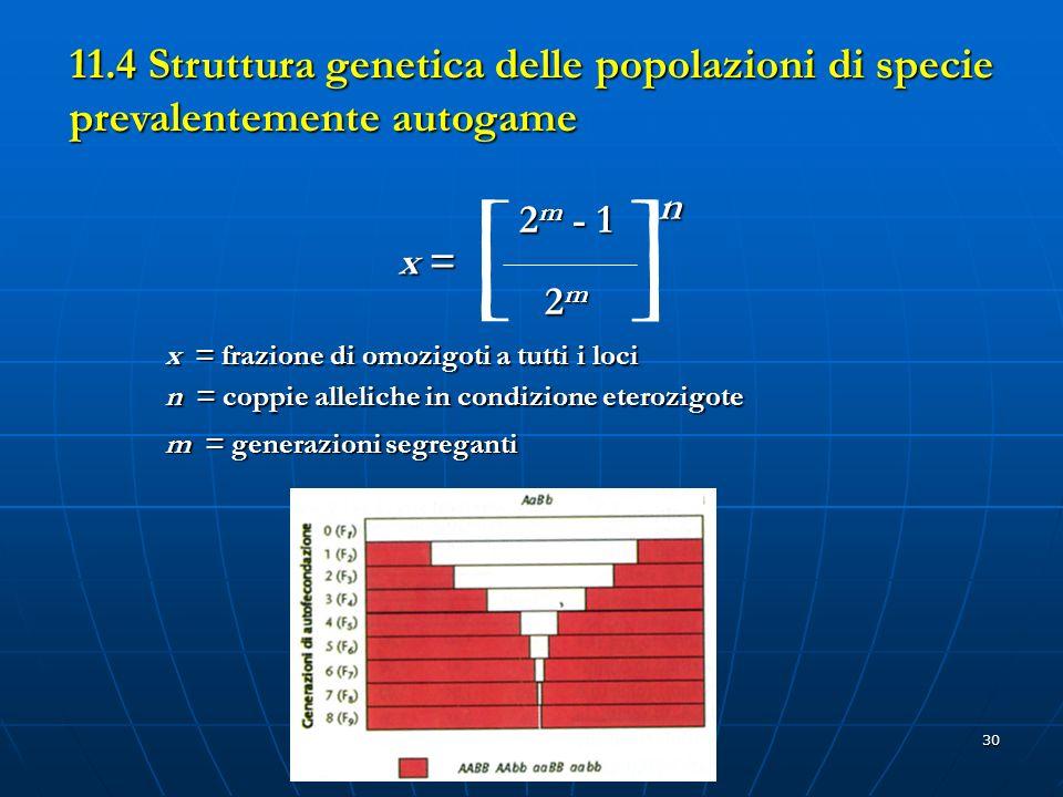 30 11.4 Struttura genetica delle popolazioni di specie prevalentemente autogame x =x =x =x = 2 m - 1 2m2m2m2m []n x = frazione di omozigoti a tutti i
