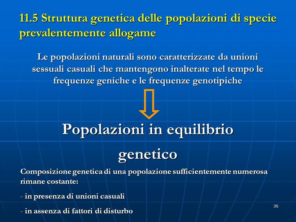 35 11.5 Struttura genetica delle popolazioni di specie prevalentemente allogame Le popolazioni naturali sono caratterizzate da unioni sessuali casuali