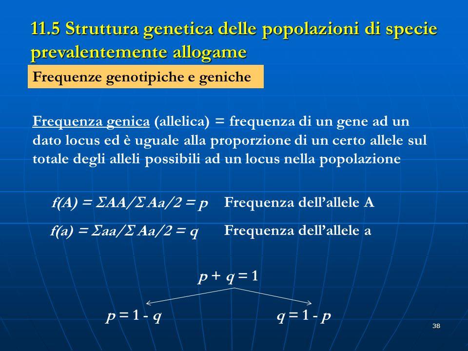 38 11.5 Struttura genetica delle popolazioni di specie prevalentemente allogame Frequenze genotipiche e geniche Frequenza genica (allelica) = frequenz