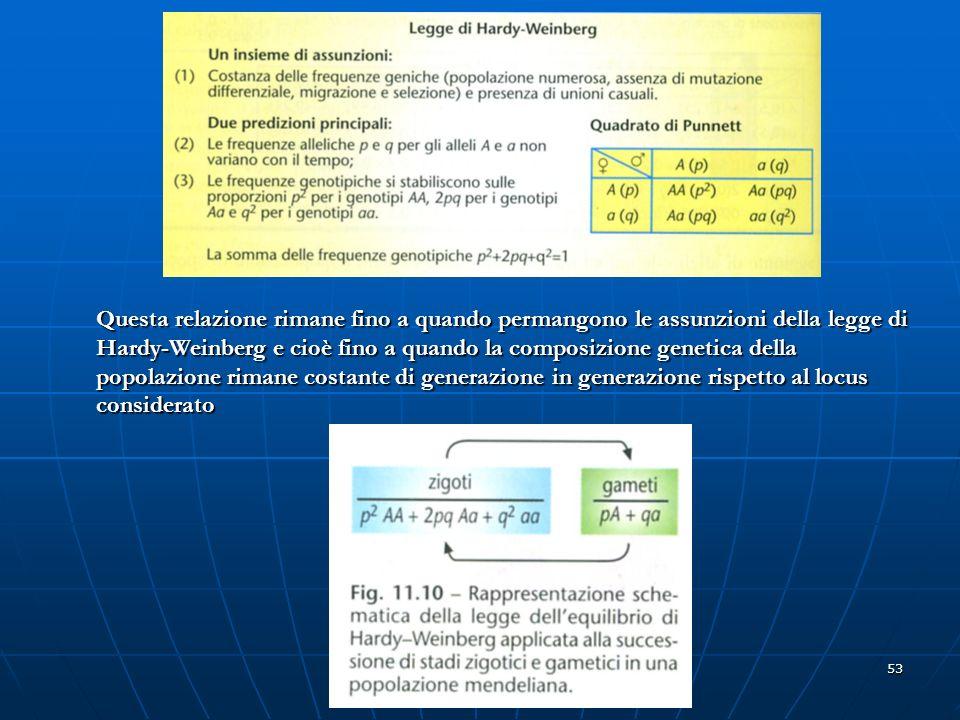 53 Questa relazione rimane fino a quando permangono le assunzioni della legge di Hardy-Weinberg e cioè fino a quando la composizione genetica della po
