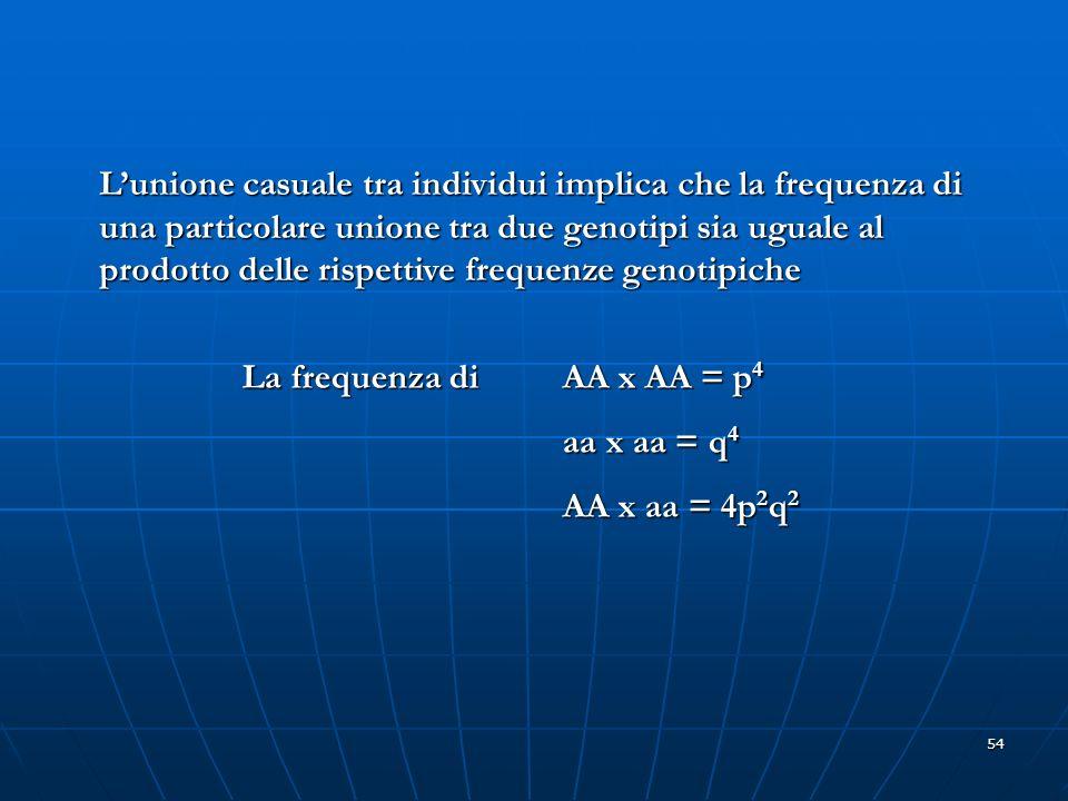 54 Lunione casuale tra individui implica che la frequenza di una particolare unione tra due genotipi sia uguale al prodotto delle rispettive frequenze
