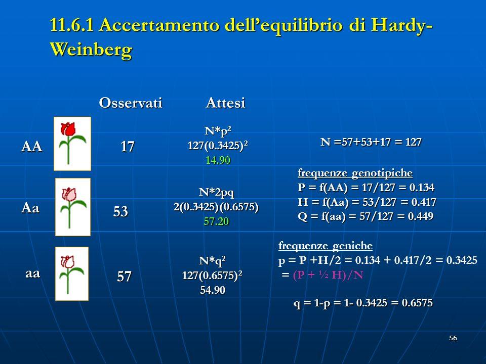 56 AA Aa aa OsservatiAttesi 17 53 57 N*p 2 127(0.3425) 2 14.90 N*2pq2(0.3425)(0.6575)57.20 N*q 2 127(0.6575) 2 54.90 N =57+53+17 = 127 frequenze genot