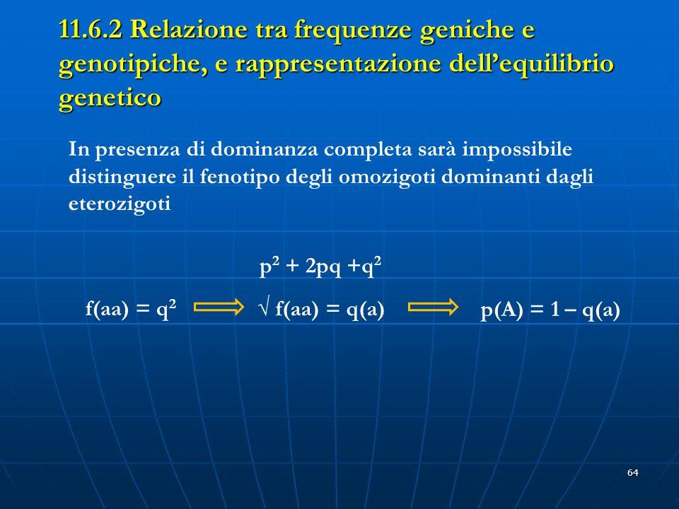 64 11.6.2 Relazione tra frequenze geniche e genotipiche, e rappresentazione dellequilibrio genetico In presenza di dominanza completa sarà impossibile