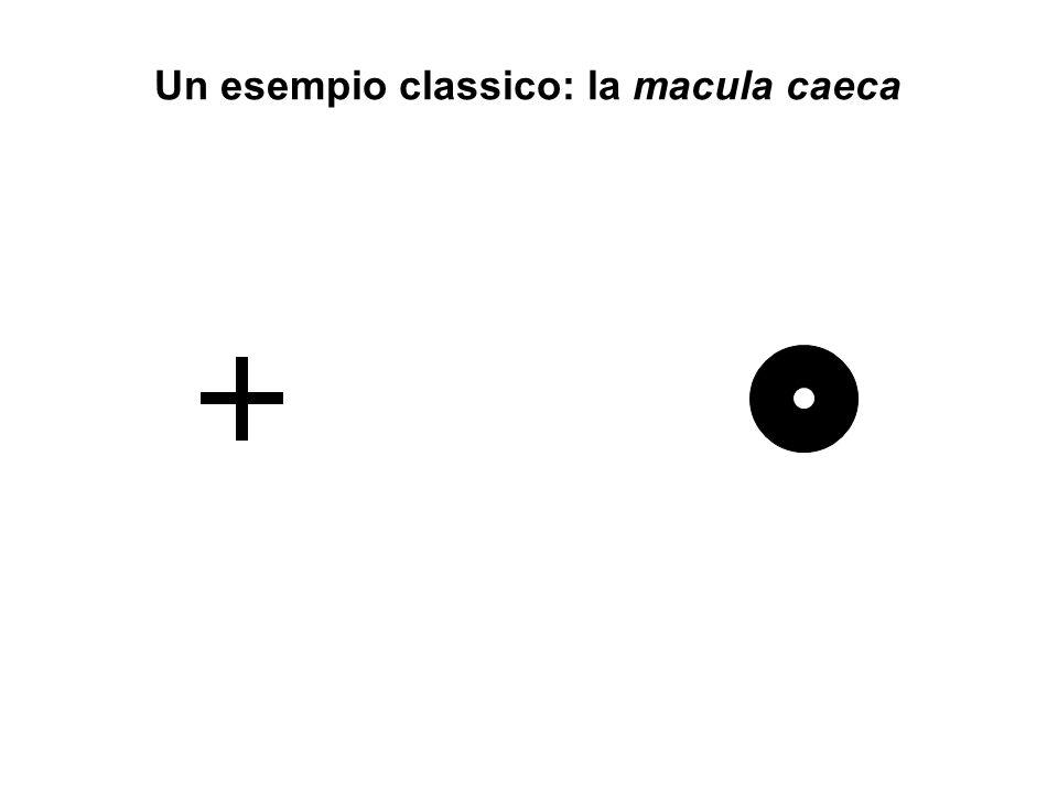 Un esempio classico: la macula caeca