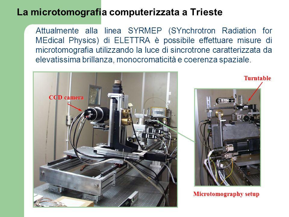 La microtomografia computerizzata a Trieste Attualmente alla linea SYRMEP (SYnchrotron Radiation for MEdical Physics) di ELETTRA è possibile effettuar