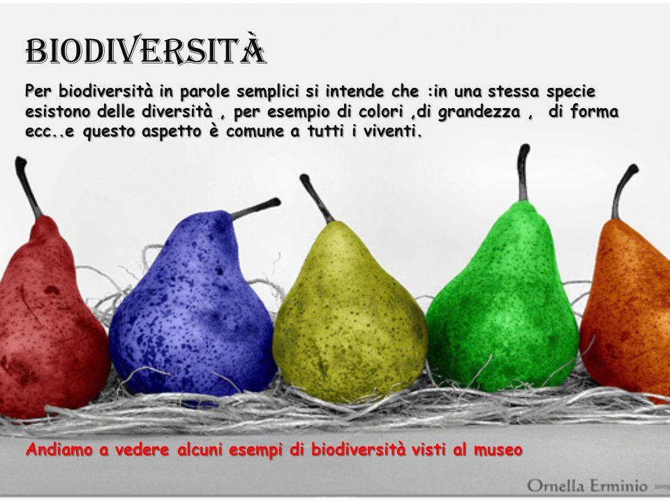 Argomenti trattati: -biodiversità. -riproduzione. -ambiente. -apparato scheletrico nei vertebrati.