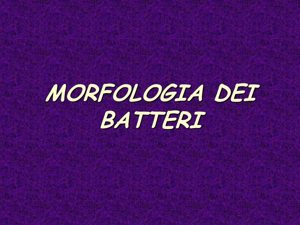 MORFOLOGIA DEI BATTERI