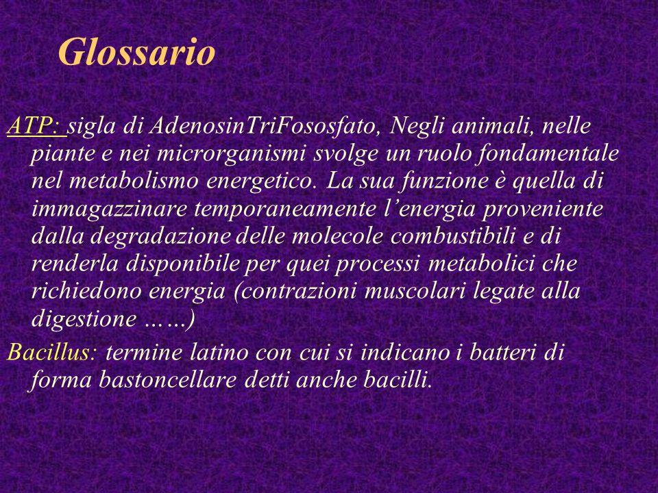 Glossario ATP: sigla di AdenosinTriFososfato, Negli animali, nelle piante e nei microrganismi svolge un ruolo fondamentale nel metabolismo energetico.