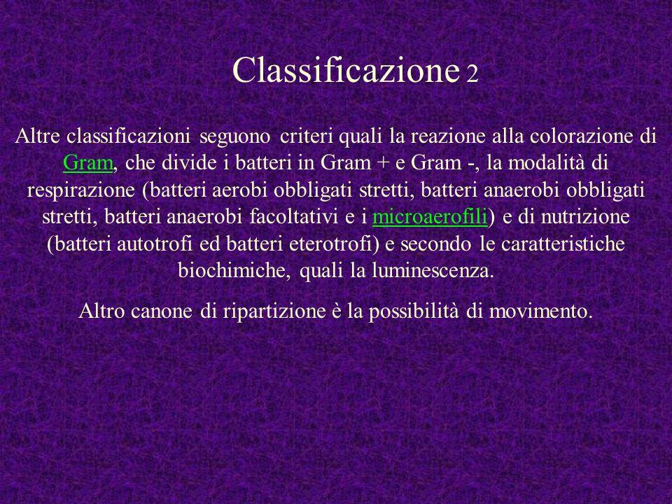 Altre classificazioni seguono criteri quali la reazione alla colorazione di Gram, che divide i batteri in Gram + e Gram -, la modalità di respirazione